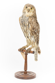 Barking Owl standing on wooden pedestal with swing tag attached.