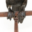 A taxidermy Little Black Cormorant standing on a wooden mount and looking right