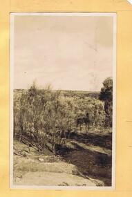 Photograph - Digital Image, Mystery mine photographs: Landscape of scrub, 1935c