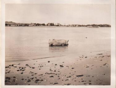 Photograph, 22/03/1938