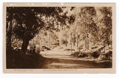 A sepia photograph of the Alexandra Road in Marysville in Victoria. This road is now known as the Marysville-Buxton Road.
