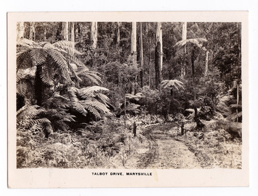 An early black and white photograph of Talbot Drive in Marysville, Victoria. The photograph was also used to produce the Rose Series postcard P. 2306.
