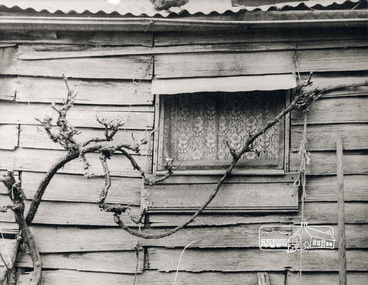 Photograph, George W. Bell, Detail, Front Wall, Birch Cottage, Yarra Glen Road, Smiths Gully, Aug 1969