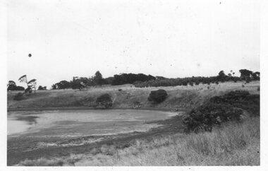 Photograph - Photograph of shoreline on Churchill Island