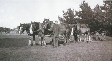 Black and white photograph, Vic Peters of Lake Bolac with Horse-team and plough