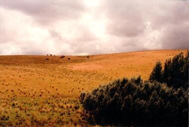 Photograph, 1990-1999