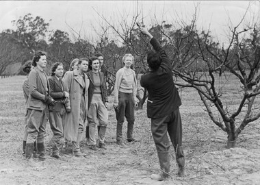 Photograph - Black and white print, Steven Henty, Students Watching Pruning Demonstration, 1940
