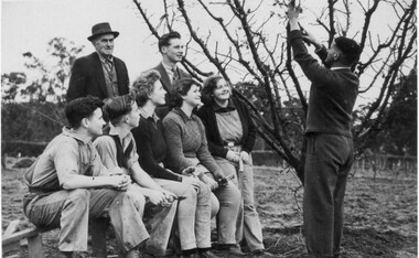 Photograph - Black and white print, Students Watching Pruning Demonstration, c. 1943